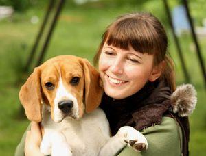 Характер собак бигль