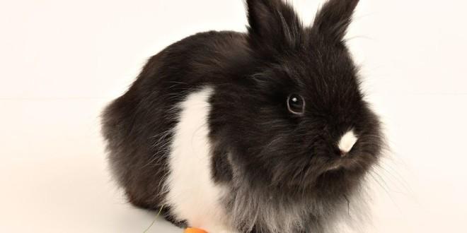 Чем правильно кормить декоративного кролика