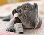 Почему коты любят валерьянку