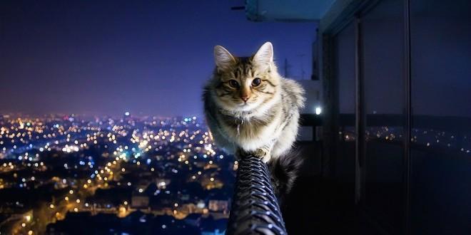 Что делать, если кошка упала с большой высоты