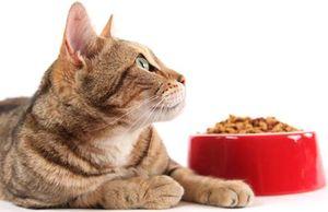 Готовые корма для котенка