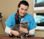 Стерилизация кошек за и против