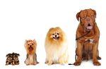 """Клички для собак """"мальчиков"""""""
