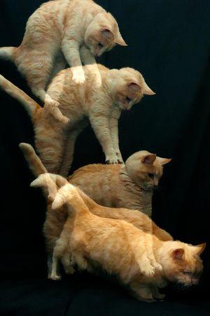 Кот всегда приземляется на лапы