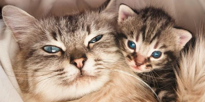 Уход за беременной кошкой