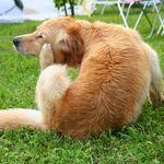 Лечение демодекоза у собак