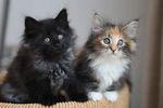 """Клички для кошек """"девочек"""""""