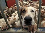 Как сделать вольер для собаки