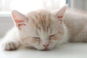 Как должны спать коты
