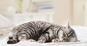Как должен спать кот