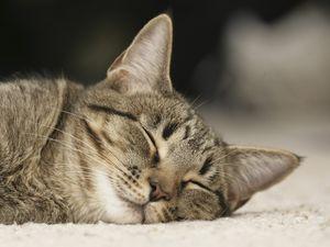 Интересные факты о сне кошки