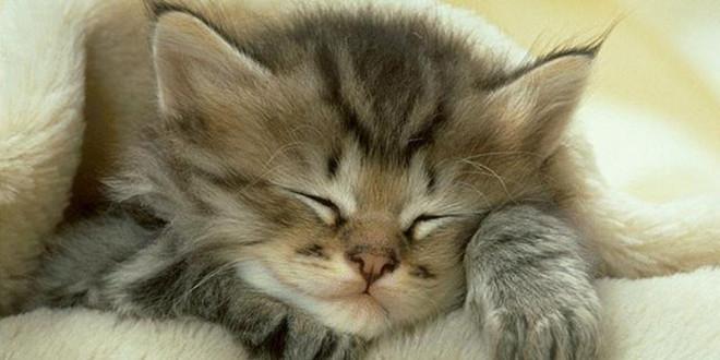 Почему кошка так много спит