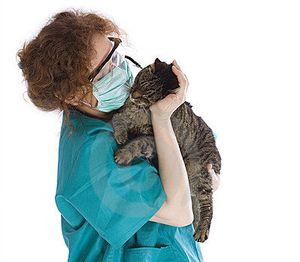 Как лечить кошку от глистов