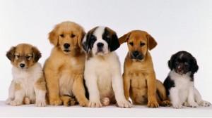 Породы собак средних размеров - фото и названия