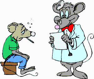 Чем болеют домашние крысы