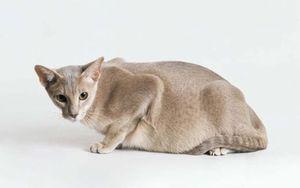 Когда, насколько часто и как правильно купать котенка, взрослого кота или кошку
