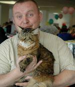 Отзыв владельца сибирской кошки