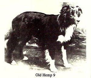 Старый Хемп - первый предок породы