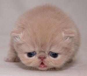 Болезни персов
