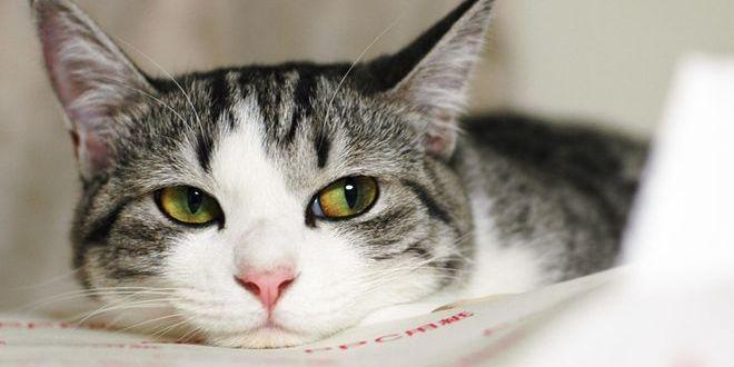 Топ-10 красивых пород кошек
