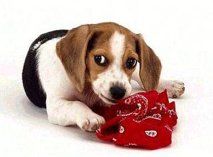 Как отучить собаку грызть предметы
