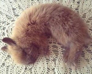 Эзотерический сонник кролик