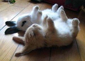 Сонник Фрейда кролик