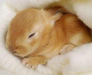 Славянский сонник кролик