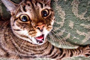 Как смешно назвать кота
