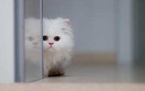 Как прикольно назвать котенка