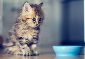 Рейтинг лучших кормов для кошек
