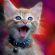 Как можно назвать котенка
