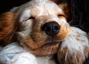 Видеть во сне собаку