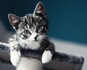 Котенок мальчик или девочка