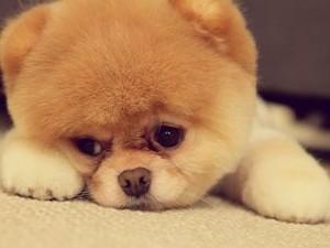 Собака ласкается во сне