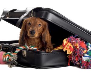 Подготовка к поездке с собакой