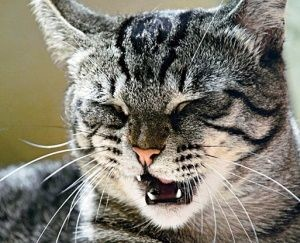 Профилактика чихания котят