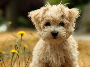 фото всех маленьких пород собак