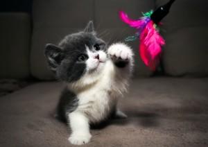 Британский плюшевый котенок фото