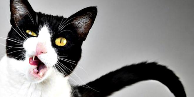10 лучших документалок о домашних животных