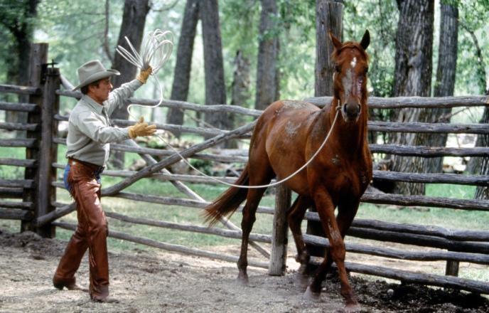 Кадр из фильма Заклинатель лошадей