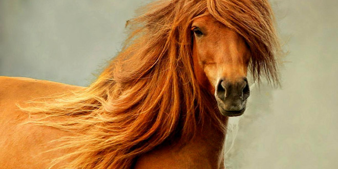 5 лучших фильмов про лошадей