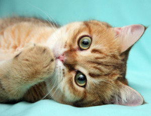 У котенка микоплазмоз