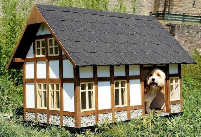 Эффектная собачья будка