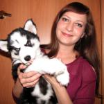 Как воспитывать щенка хаски
