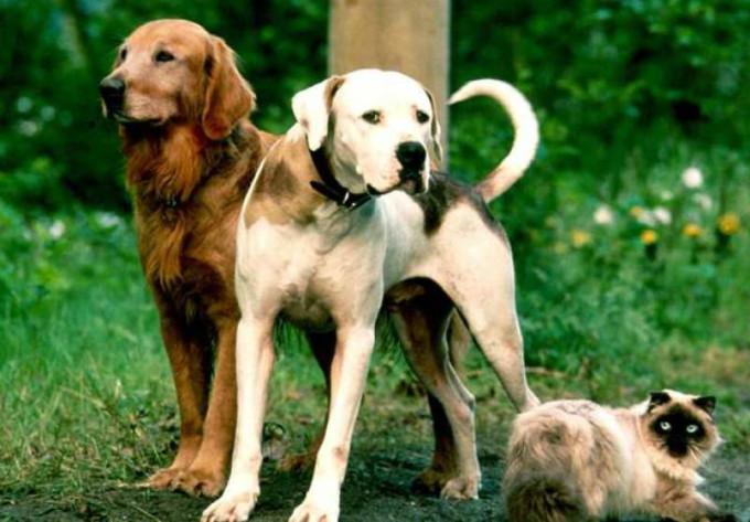Фильм про говорящих собак и кошку