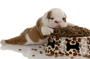 Самый лучший сухой корм для собак