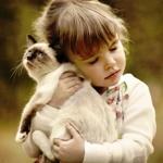 Балинезийская кошка отзывы