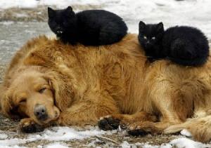 Бездомная собака с котятами