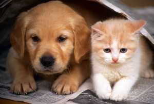 Бездомные котенок и щенок